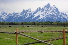 μεγάλο εθνικό πάρκο teton στοκ φωτογραφίες