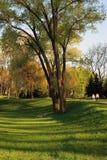 Μεγάλο ενιαίο δέντρο δύο Στοκ φωτογραφίες με δικαίωμα ελεύθερης χρήσης