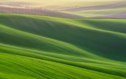 Μεγάλο θερινό τοπίο με τους τομείς του σίτου Φυσικό αγροτικό τοπίο ανοίξεων στο πράσινο χρώμα Πράσινος τομέας σίτου με τα λωρίδες στοκ εικόνες με δικαίωμα ελεύθερης χρήσης