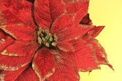 μεγάλο κόκκινο poinsettia Στοκ Εικόνες