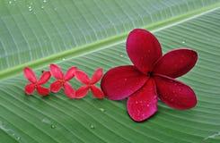 μεγάλο λουλούδι μικρό Στοκ Φωτογραφίες