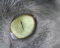 μεγάλο μακρο πλάνο ματιών γατών Στοκ φωτογραφία με δικαίωμα ελεύθερης χρήσης