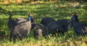 δωρεάν μεγάλο μαύρο πουλί φωτογραφίες