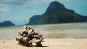 Μεγάλο νεκρό κοράλλι σε μια τροπική παραλία απόθεμα βίντεο
