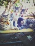 μεγάλο οικογενειακό γατάκι γατών μικρό στοκ φωτογραφίες