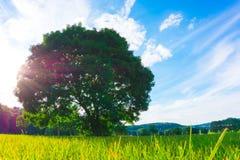 Μεγάλο παλαιό δρύινο δέντρο στη μέση Στοκ φωτογραφία με δικαίωμα ελεύθερης χρήσης