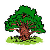 Μεγάλο παλαιό δέντρο Στοκ εικόνα με δικαίωμα ελεύθερης χρήσης