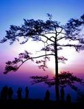 μεγάλο σκιαγραφημένο δέν&tau Στοκ εικόνες με δικαίωμα ελεύθερης χρήσης