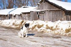 Μεγάλο σκυλί το χειμώνα στο σπίτι στοκ εικόνες