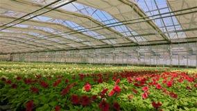 Μεγάλο σύγχρονο θερμοκήπιο για την ανάπτυξη των λουλουδιών Σύγχρονη αυτοματοποιημένη στέγη γυαλιού σε ένα θερμοκήπιο στα πλαίσια απόθεμα βίντεο