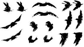 Μεγάλο σύνολο διαφορετικών γραπτών σκιαγραφιών πουλιών Στοκ φωτογραφίες με δικαίωμα ελεύθερης χρήσης