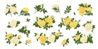 Μεγάλο σύνολο κίτρινων και άσπρων τριαντάφυλλων, ανθοδεσμών, λουλουδιών και οφθαλμών Στοκ φωτογραφίες με δικαίωμα ελεύθερης χρήσης