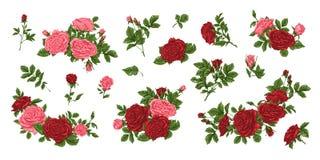 Μεγάλο σύνολο κίτρινων και κόκκινων τριαντάφυλλων, ανθοδεσμών, λουλουδιών και οφθαλμών Στοκ Εικόνα