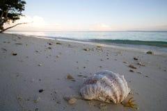 Μεγάλο τροπικό θαλασσινό κοχύλι στην άμμο στην ανατολή Στοκ Φωτογραφίες