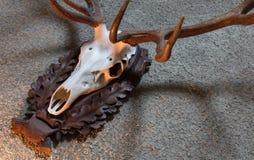 Μεγάλο τρόπαιο κυνηγιού ελαφιών Στοκ εικόνα με δικαίωμα ελεύθερης χρήσης