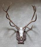 Μεγάλο τρόπαιο κυνηγιού ελαφιών Στοκ εικόνες με δικαίωμα ελεύθερης χρήσης