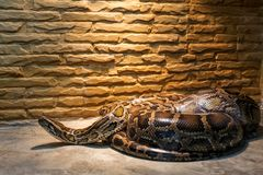 Μεγάλο φίδι στο terrarium στοκ φωτογραφία με δικαίωμα ελεύθερης χρήσης