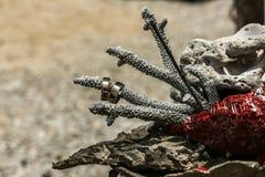 Μεγάλα άσπρα, κόκκινα, καφετιά ξηρά κοράλλια και 2 γαμήλια δαχτυλίδια που τοποθετούνται Στοκ Φωτογραφία