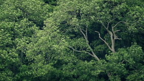 Μεγάλα δέντρα που τινάζουν στον αέρα φιλμ μικρού μήκους