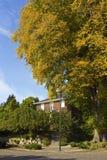 Μεγάλα δέντρα Σιάτλ WA. Στοκ φωτογραφίες με δικαίωμα ελεύθερης χρήσης