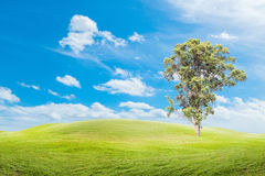 Μεγάλα δέντρα στη χλόη με το υπόβαθρο μπλε ουρανού Στοκ φωτογραφίες με δικαίωμα ελεύθερης χρήσης