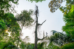 Μεγάλα δασικά δέντρα φύσης Στοκ φωτογραφία με δικαίωμα ελεύθερης χρήσης