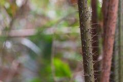 Μεγάλα δασικά δέντρα φύσης Στοκ εικόνα με δικαίωμα ελεύθερης χρήσης