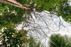 Μεγάλα δασικά δέντρα φύσης Στοκ φωτογραφίες με δικαίωμα ελεύθερης χρήσης