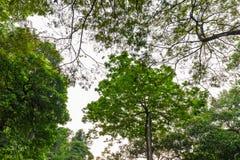 Μεγάλα δασικά δέντρα φύσης Στοκ Φωτογραφία