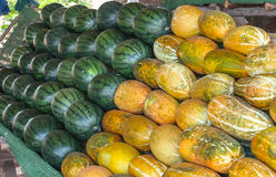 Μεγάλα γλυκά πράσινα καρπούζια Στοκ φωτογραφία με δικαίωμα ελεύθερης χρήσης
