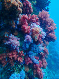 Μεγάλα θαλάσσια βάθη και κοραλλιογενής ύφαλος, ζωηρόχρωμα κοράλλια στο ωκεάνιο τοπίο Στοκ Εικόνα