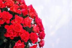μεγάλα κόκκινα τριαντάφυλλα ανθοδεσμών Στοκ Φωτογραφίες