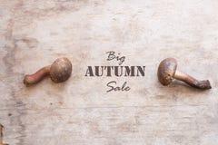Μεγάλα μανιτάρια και κείμενο ιδέας πώλησης φθινοπώρου Στοκ Εικόνες