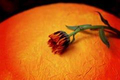 Μεγάλα πορτοκαλιά αυγό και λουλούδια Στοκ εικόνα με δικαίωμα ελεύθερης χρήσης