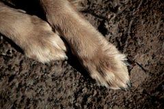 Μεγάλα πόδια σκυλιών στο υπόβαθρο ταπήτων Φιλτραρισμένη εικόνα Στοκ φωτογραφία με δικαίωμα ελεύθερης χρήσης