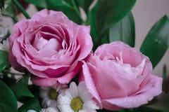 Μεγάλα ρόδινα τριαντάφυλλα στο μπεζ υπόβαθρο Isolited Στοκ φωτογραφία με δικαίωμα ελεύθερης χρήσης
