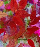 Μεγάλα φωτεινά υπόβαθρα Τα χρώματα και η φύση μίξης Απεικόνιση αποθεμάτων