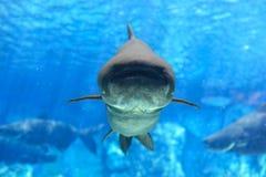 μεγάλα ψάρια Στοκ Φωτογραφίες