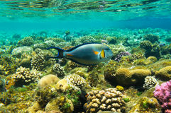 Μεγάλα όμορφα ψάρια Στοκ φωτογραφία με δικαίωμα ελεύθερης χρήσης