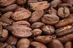 Μεγάλα arabica φασόλια καφέ Στοκ Φωτογραφία