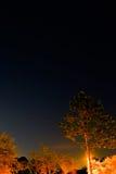 Μεγάλα Dipper και δέντρο Στοκ Εικόνα