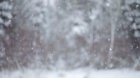 Μεγάλα Snowflakes που πέφτουν κάτω κατά τη διάρκεια μιας χειμερινής ημέρας απόθεμα βίντεο