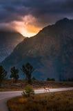 Μεγάλες άλκες Teton Στοκ φωτογραφία με δικαίωμα ελεύθερης χρήσης