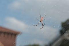 Μεγάλες αράχνες στον κήπο Στοκ φωτογραφία με δικαίωμα ελεύθερης χρήσης
