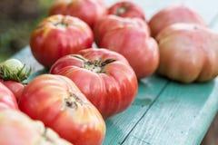 Μεγάλες ντομάτες σμέουρων Στοκ φωτογραφία με δικαίωμα ελεύθερης χρήσης