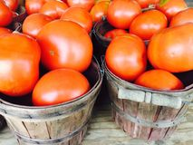 Μεγάλες ντομάτες Στοκ εικόνες με δικαίωμα ελεύθερης χρήσης