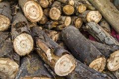Μεγάλες ρίζες που αφήνονται πίσω από τα κομμένα δέντρα λευκών, Στοκ φωτογραφία με δικαίωμα ελεύθερης χρήσης