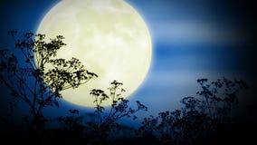 Μεγάλες φεγγάρι και χλόη απόθεμα βίντεο