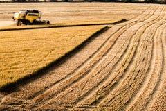 Μεγάλης απόστασης άποψη συγκομιδών ρυζιού Στοκ Εικόνες