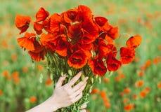 Μεγάλη ανθοδέσμη των κόκκινων παπαρουνών στα χέρια γυναικών Στοκ Εικόνες